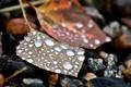 Картинка листья, капли, камни