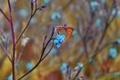 Картинка макро, цветы, бабочка, насекомое