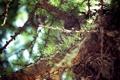 Картинка зелёный, дерево, кора, лето