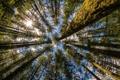 Картинка Washington, лес, природа, деревья, Moulton Falls