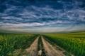 Картинка небо, дорога, поле, сурепка, урожай, пшеница