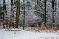 Картинка Ontario, Homer Watson Park Lookout, Fallen Leaves
