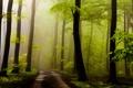 Картинка дорога, лес, листья, солнце, деревья, туман