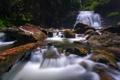 Картинка водопад, лес, река, деревья, камни