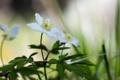 Картинка цветок, макро, природа, весна