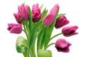 Картинка букет, тюльпаны, розовые, капельки воды