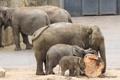 Картинка бревно, слоны, зоо