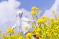 Картинка небо, цветы, игрушка, кукла, блондинка