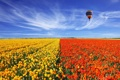 Картинка пейзаж, цветы, природа, маки, маковое поле
