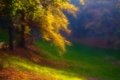Картинка осень, лес, трава, деревья, туман, парк, дымка