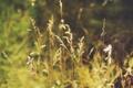 Картинка зелень, трава, лето