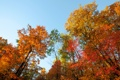 Картинка осень, небо, листья, деревья