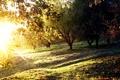 Картинка лето, солнце, деревья, поляна