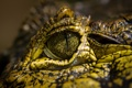 Картинка макро, глаз, крокодил