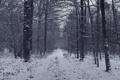Картинка дорога, лес, снег, деревья, Зима