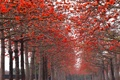 Картинка деревья, цветы, парк, весна, цветение