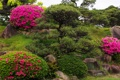 Картинка камни, кусты, рододендрон, сад, парк, цветы