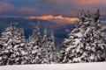 Картинка зима, лес, снег, закат