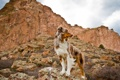 Картинка фон, горы, собака