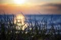 Картинка трава, макро, закат, природа