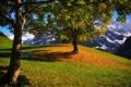 Картинка осень, Urigen, деревья, Switzerland, Unterschächen, Уриген, Унтершехен