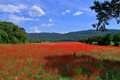 Картинка поле, небо, трава, деревья, цветы, горы, холмы