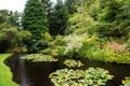 Картинка деревья, пруд, парк, Шотландия, кусты, Attadale Gardens, Strathcarron