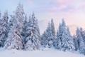 Картинка зима, снег, рассвет, ёлки