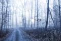 Картинка лес, дорога, туман