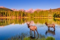 Картинка лес, животные, небо, закат, озеро, олень