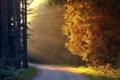 Картинка закат, пейзаж, осень, деревья, дорога, свет, листва