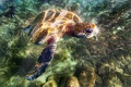 Картинка море, вода, камни, черепаха, дно, блик