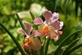 Картинка листья, природа, лепестки, орхидея