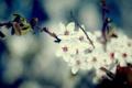 Картинка листья, макро, цветы, природа, фото, обои, растения