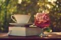 Картинка бокал, кружка, книга, блюдце, закладка