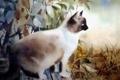 Картинка кошка, фон, картина