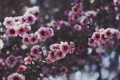 Картинка цветок, веточка, розовый, лепесток