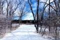 Картинка следы, лес, деревья, зима, снег, небо