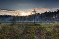 Картинка лес, паутина, деревья, облака, туман