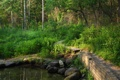 Картинка лес, вода, деревья, пруд, парк, камни, тропинка