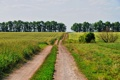 Картинка дорога, лес, небо, деревья, следы, природа, фото