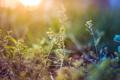 Картинка трава, макро, растения, размытие, градиент