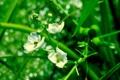 Картинка фото, зелень, лепестки, листья, обои, стебли, растения