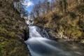Картинка лес, пейзаж, природа, река, весна