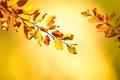 Картинка листья, осень, ветка