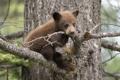 Картинка лес, природа, медведь