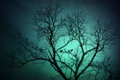 Картинка силуэт, небо, птицы, дерево