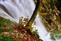 Картинка листья, камни, река, водопад, поток, вода, дерево