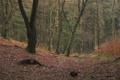 Картинка осень, лес, деревья, природа, фото, листва