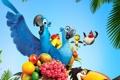 Картинка птицы, мультфильм, попугай, фрукты, тукан, рио, голубчик
